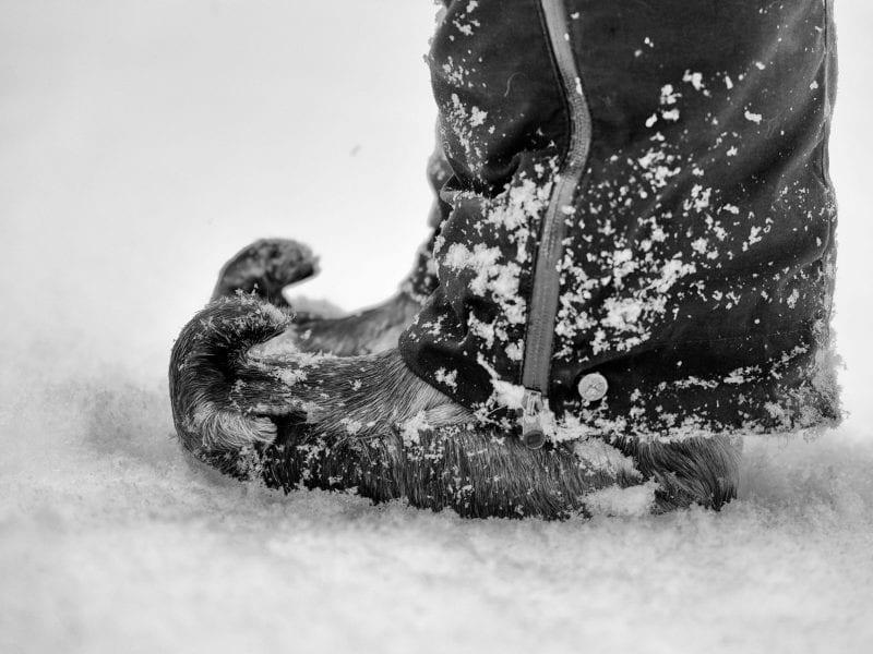 Niilas Schuhe: Die gekrümmte Spitze sorgt dafür, dass sie fest in der Bindung der Skier sitzen.